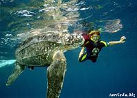 Кожистая черепаха (Dermochelys coriacea)